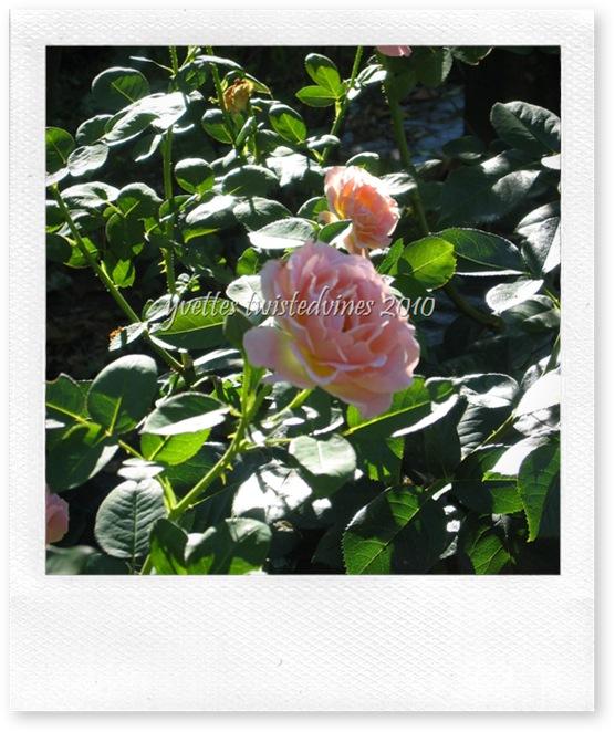 garden 016