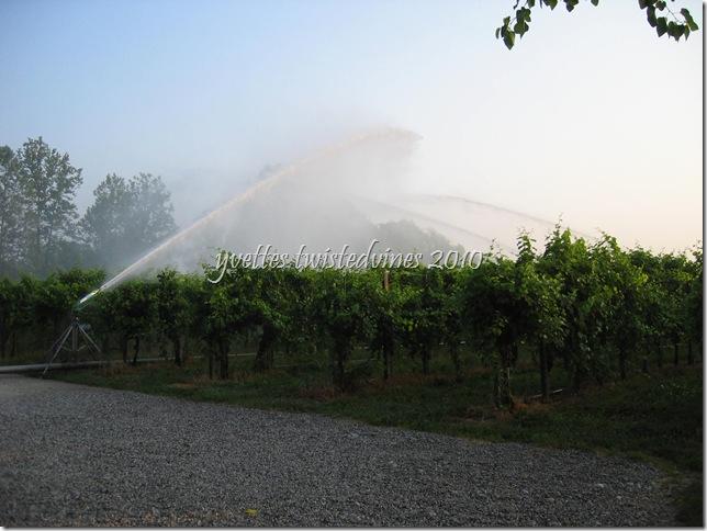 irrigation 005