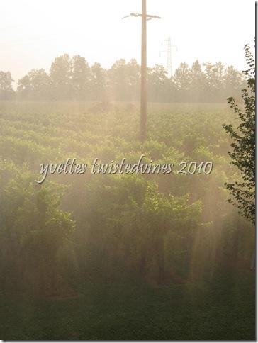irrigation 009