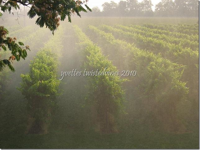 irrigation 010