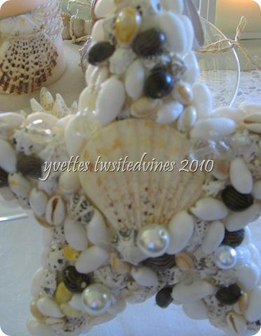 starfish 024