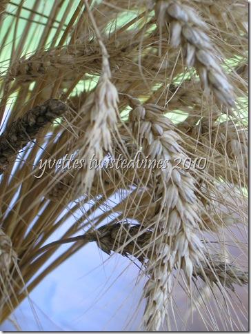 wheat 012