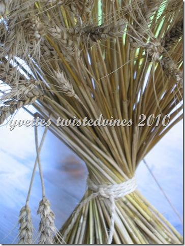 wheat 015