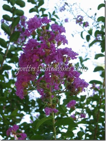 sundays garden 051