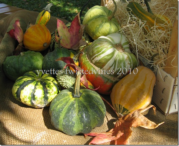 colourful pumpkins