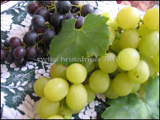 grapes 012