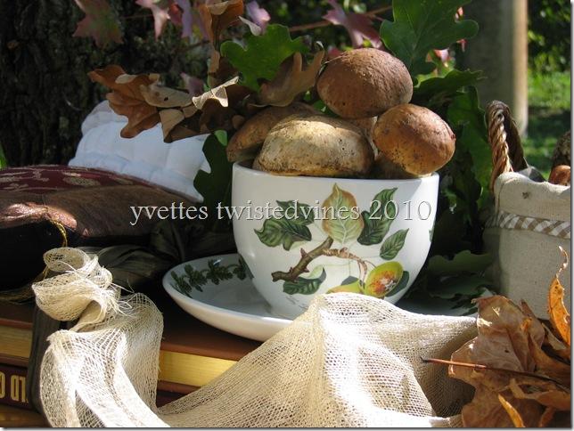 mushrooms 015