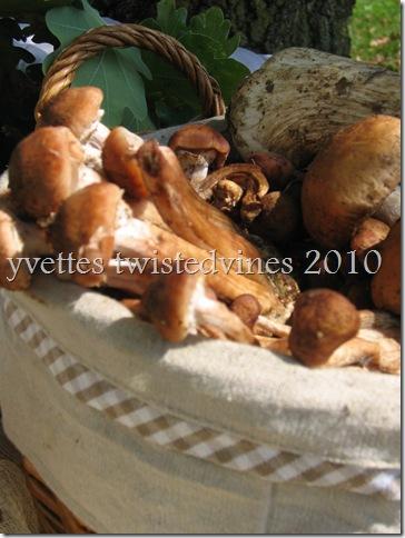 mushrooms 016