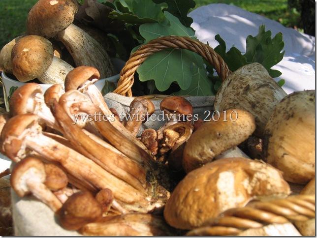 mushrooms 018