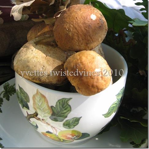 mushrooms 025