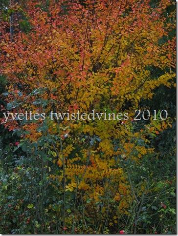 misto autumn 011