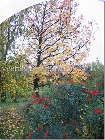 misto autumn 016