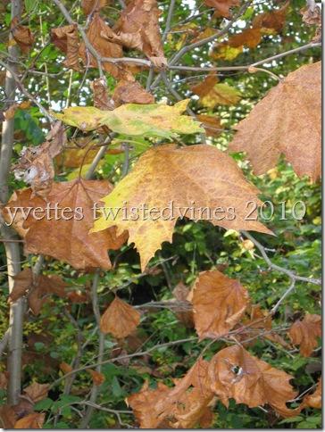 misto autumn 053