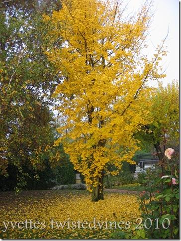 misto autumn 062