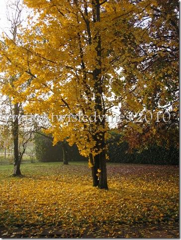 misto autumn 074