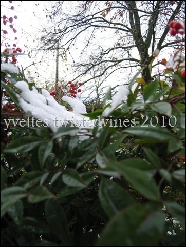 winter 2010 011