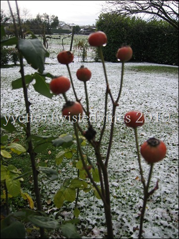 winter 2010 013