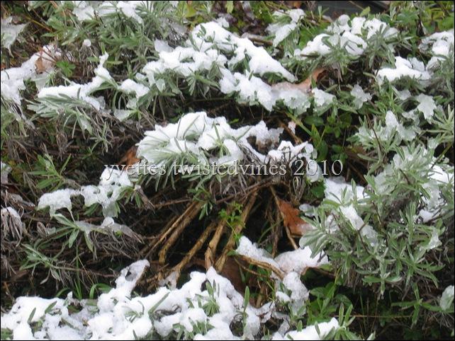 winter 2010 015