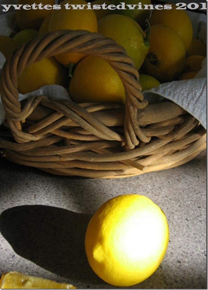 lemon mergpie 003