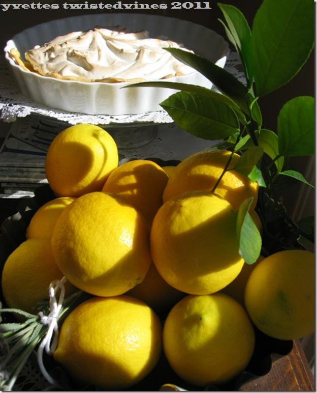 lemon mergpie 019