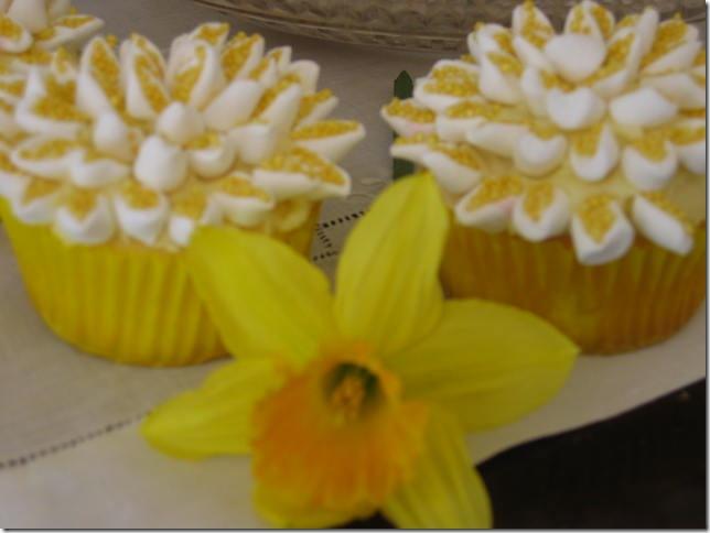 cupcake daff 011