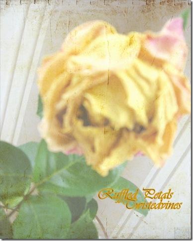 ruffled petals 3