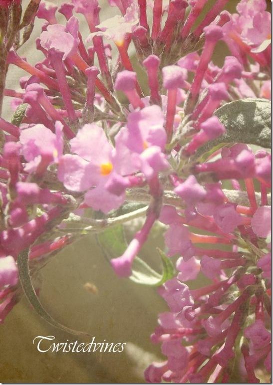 flower2012