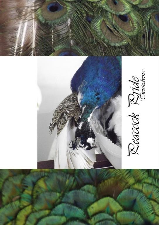 peacocks4