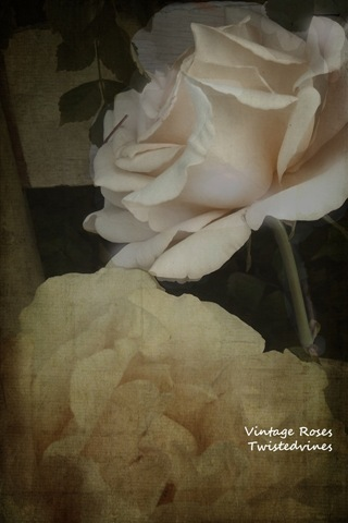 vintage roses_edited-2